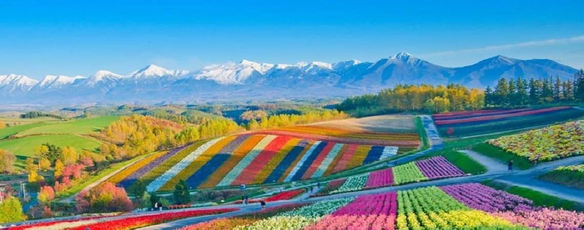 How Do Flowers Get Their Colour